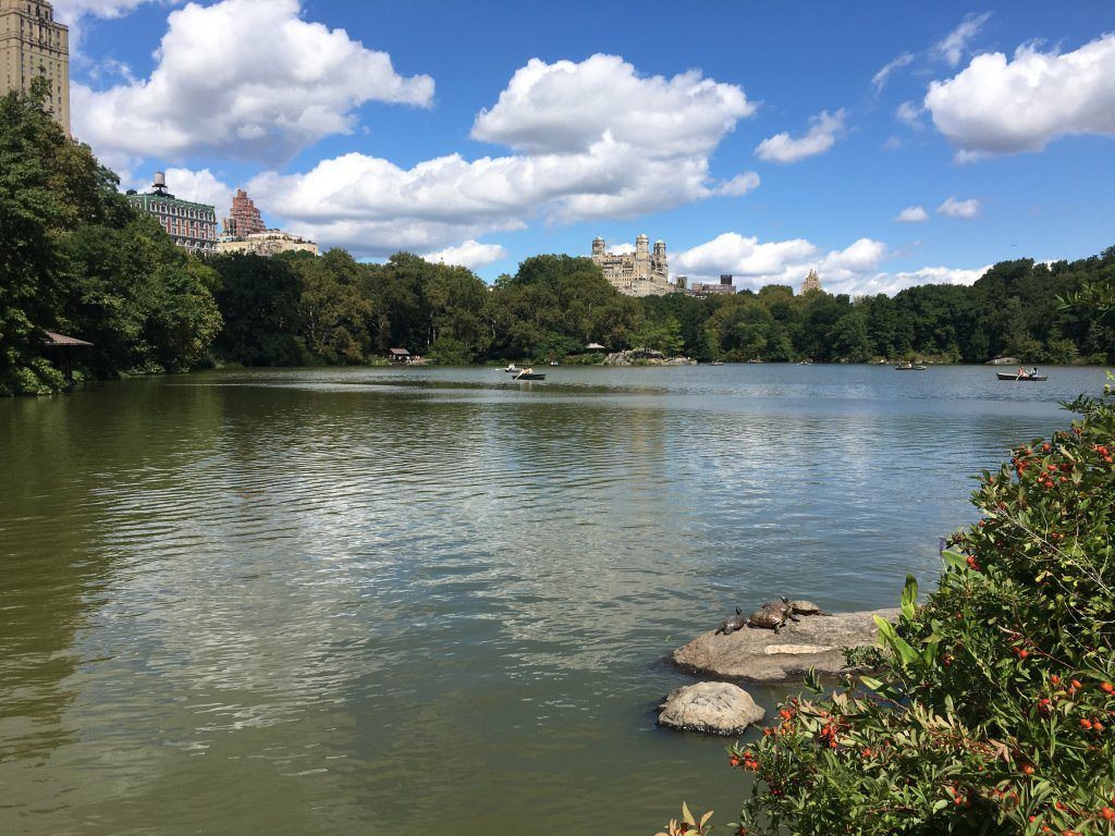Central Park: An oasis in NYC