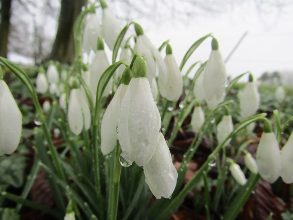 Spectacular Snowdrops Weekend at Newark Park, Gloucestershire