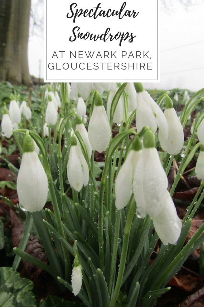 Snowdrops at Newark House Gloucestershire | Ladies What Travel pin 1