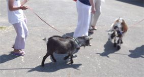 Ladies what…walk goats