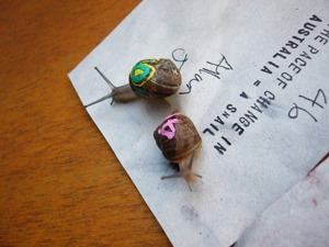 Snail racing. By Simon Jardine (originally posted to Flickr as melb cup 07 041) [CC-BY-2.0 (http://creativecommons.org/licenses/by/2.0)], via Wikimedia Commons
