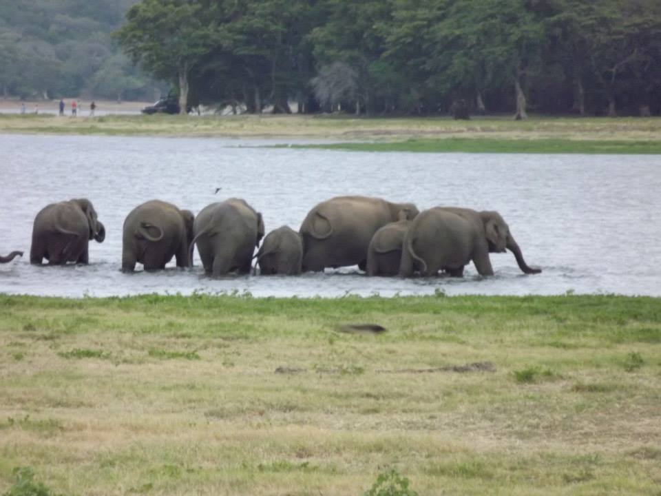 Safari in Sri Lanka.