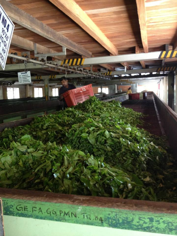 In the tea factory.