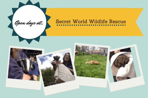 Open days at Secret World Wildlife Rescue