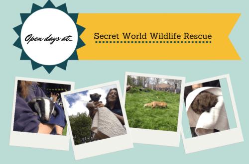Open days at Secret World Wildlife Rescue