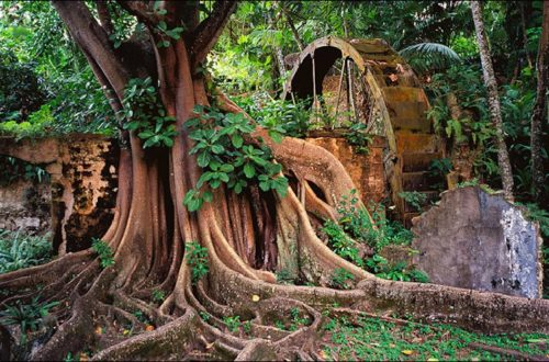 St Lucia rainforest