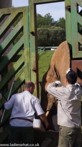 Cabarceno elephant care