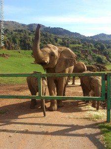 Cabarceno elephants