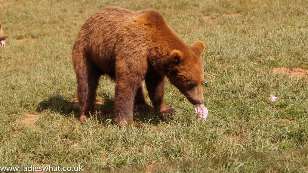 Cabarceno bears