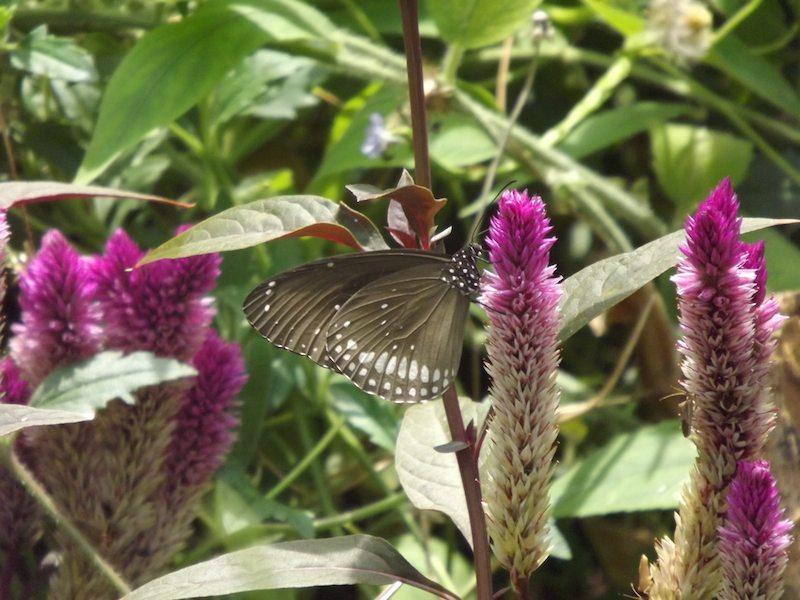 cinnamon lodge butterfly farm