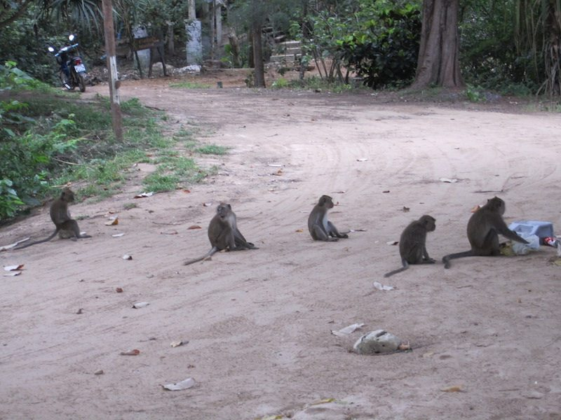 Monkeys at the Koh Lanta Nature Reserve.