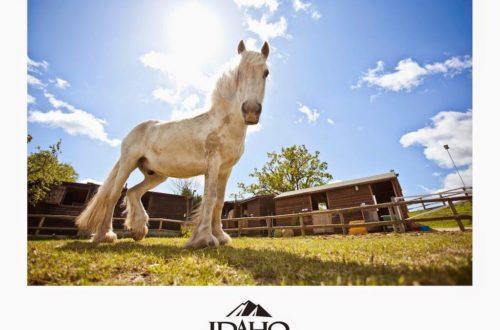 Horse at Trent Park Equestrian Centre