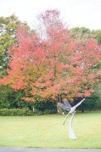 Autumn Tree Dartmoor Moorland Garden Hotel