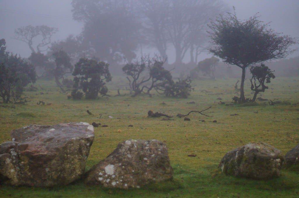 misty dartmoor
