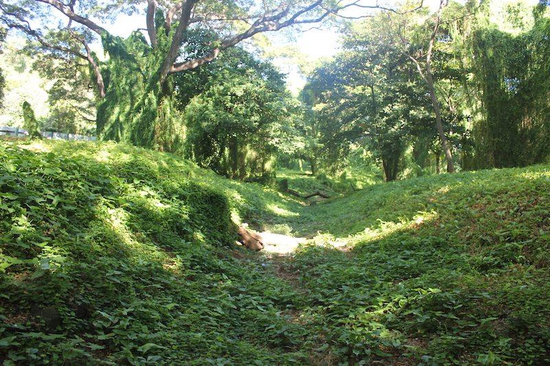 Exploring Havana Forest.