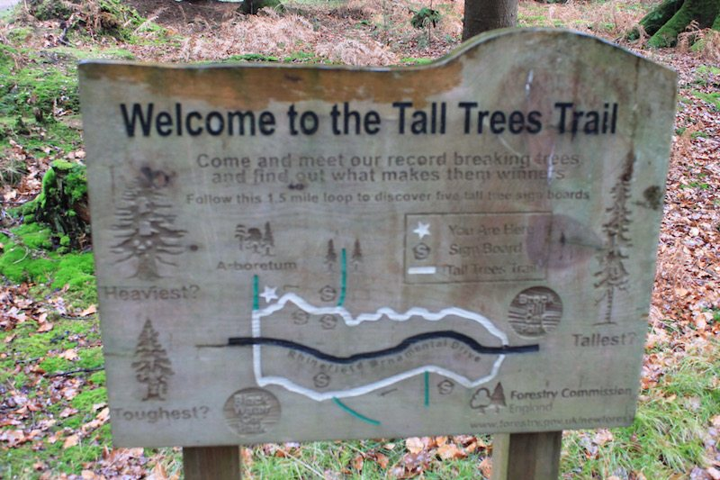 The Tall Trees Trail.