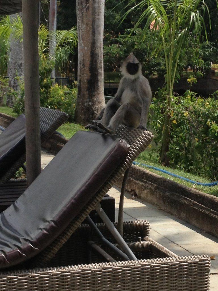 monkey chilling