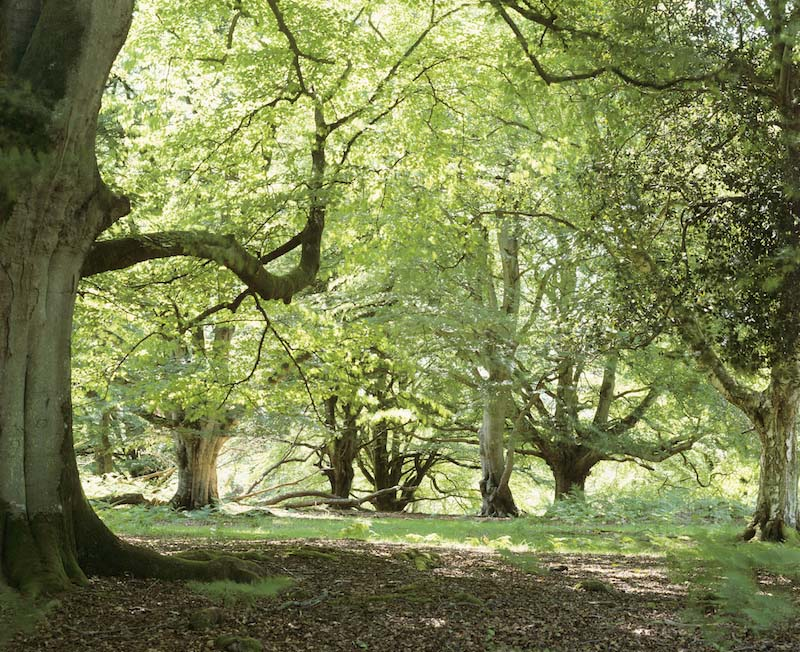 A New Forest glade in spring