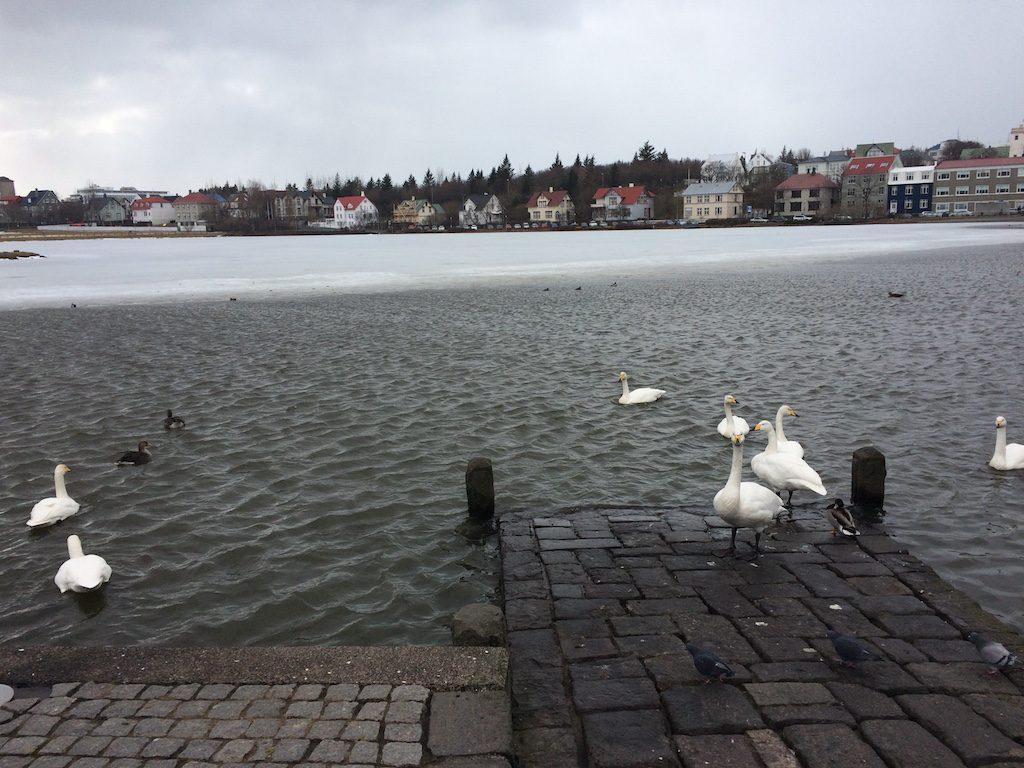 Lake Tjörnin