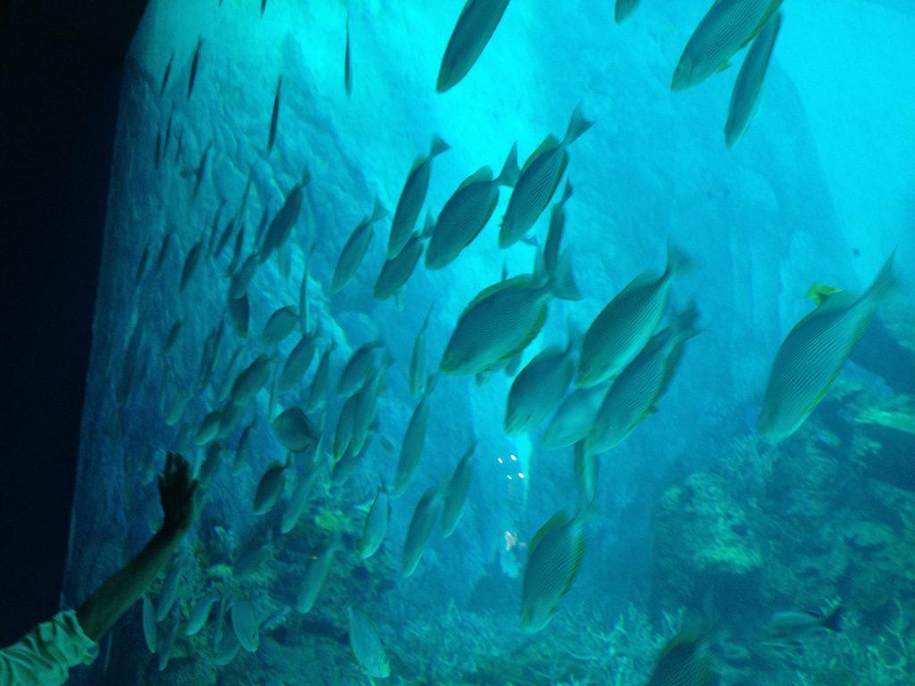 S.E.A. Aquarium Singapore | Ladies What Travel