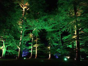 Enchanted Christmas at Westonbirt Arboretum   Ladies What Travel