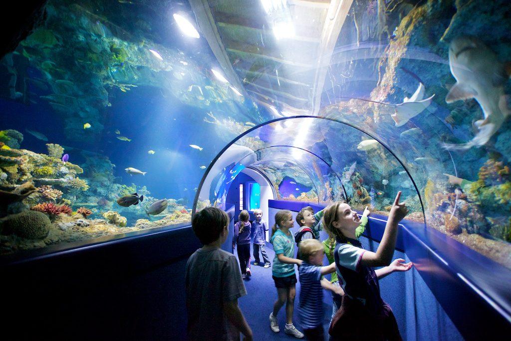 Going underwater at Bristol Aquarium. [image credit Bristol Aquarium]