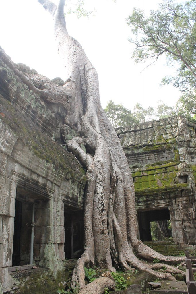 Ta Prohm Cambodia | Ladies What Travel