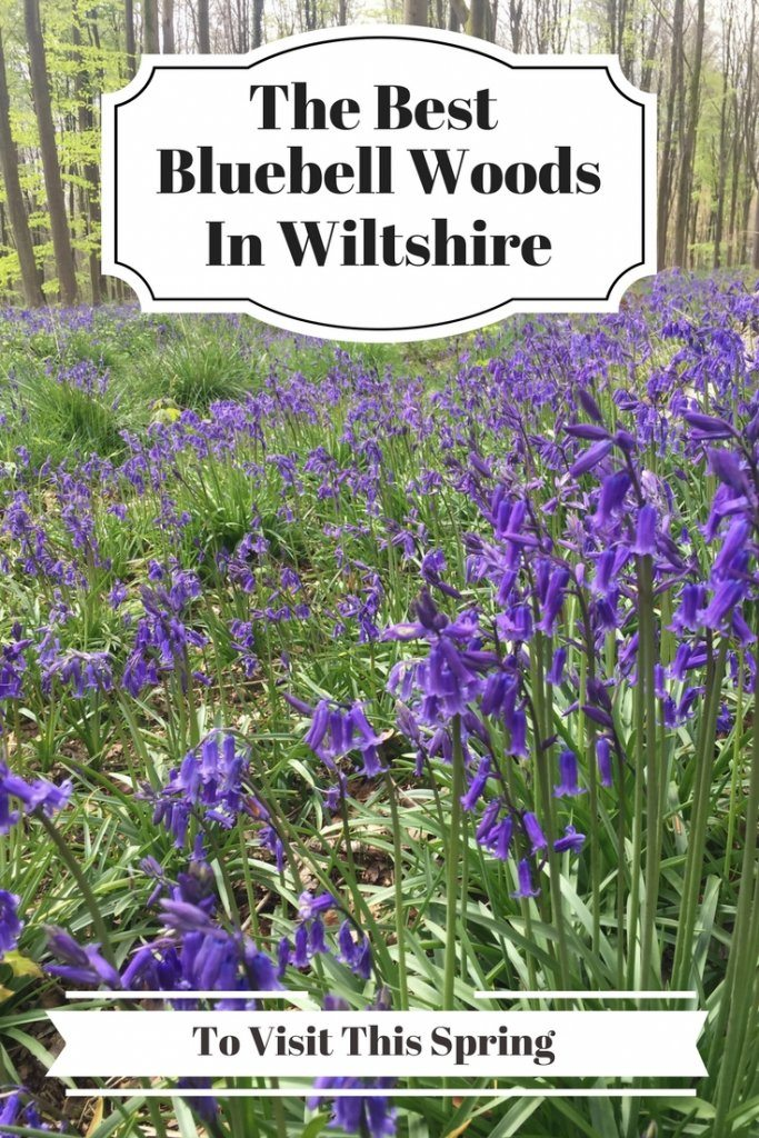 bluebell woods in wiltshire | Ladies What Travel