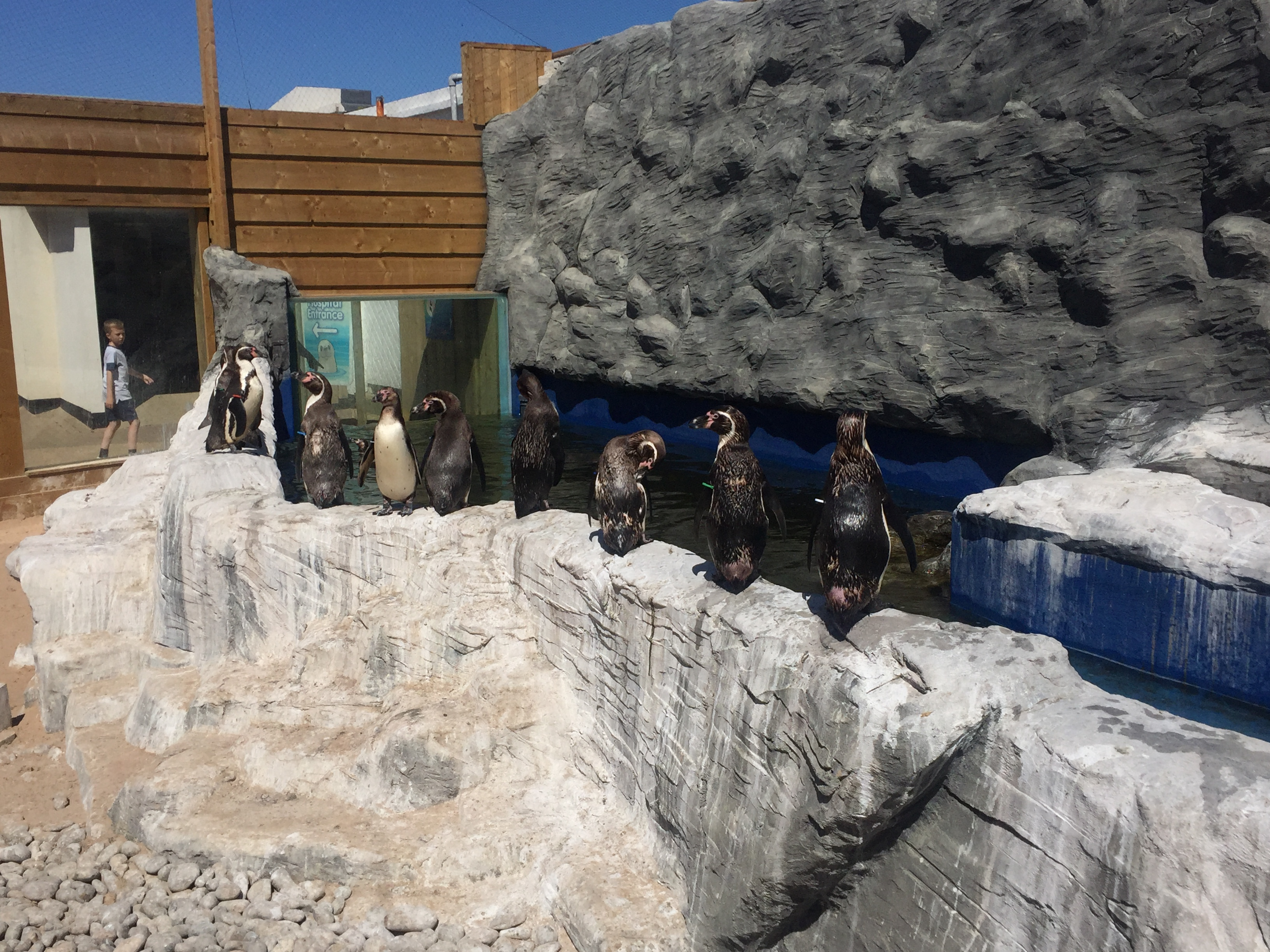 Penguins lining up to be fed at Hunstanton Sea Life Centre.