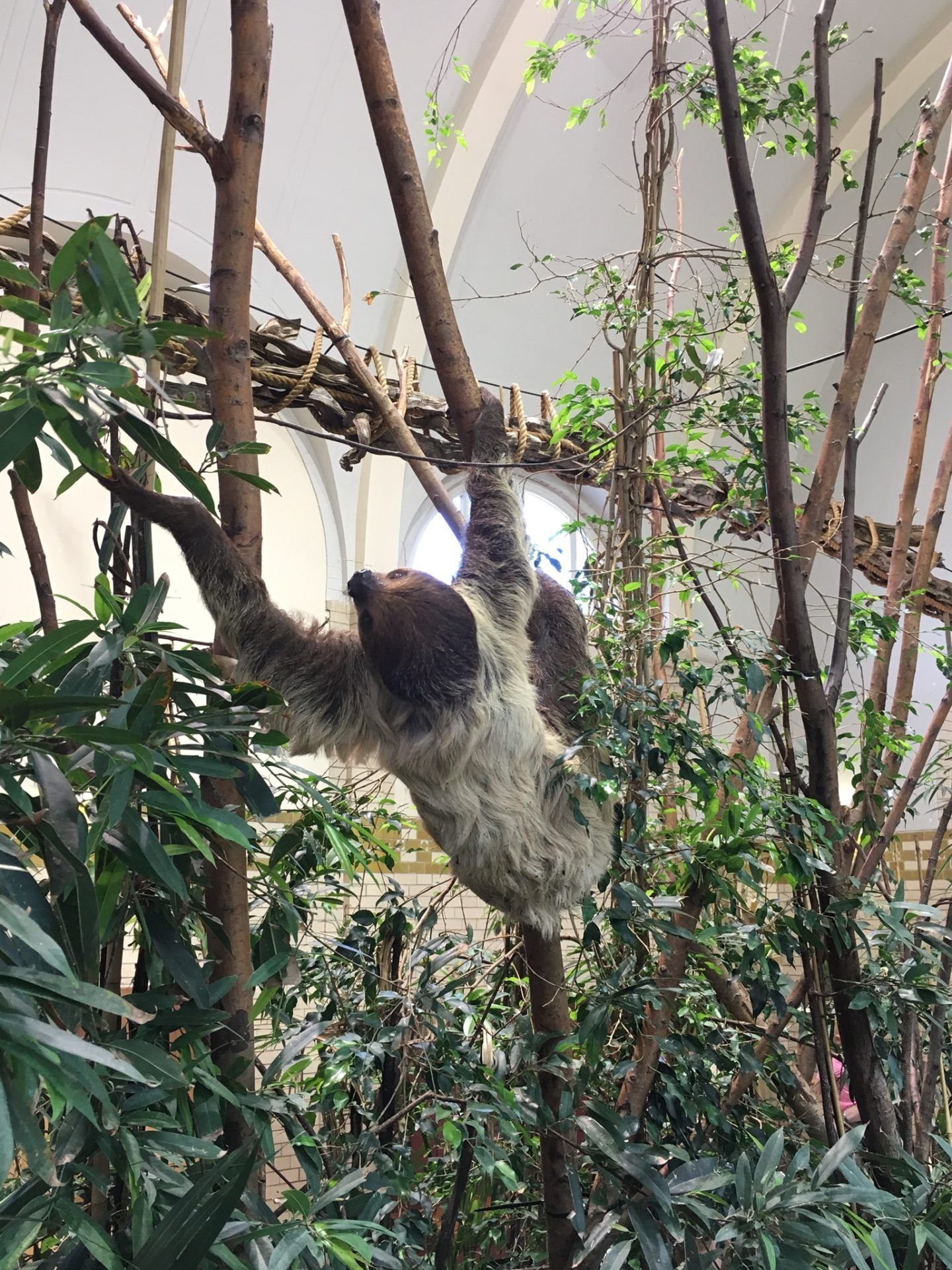 A sloth at Amsterdam's zoo