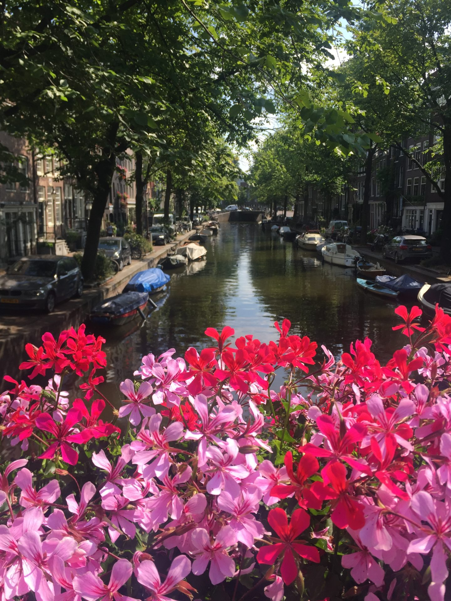 A quick guide to Amsterdam's quirkier side