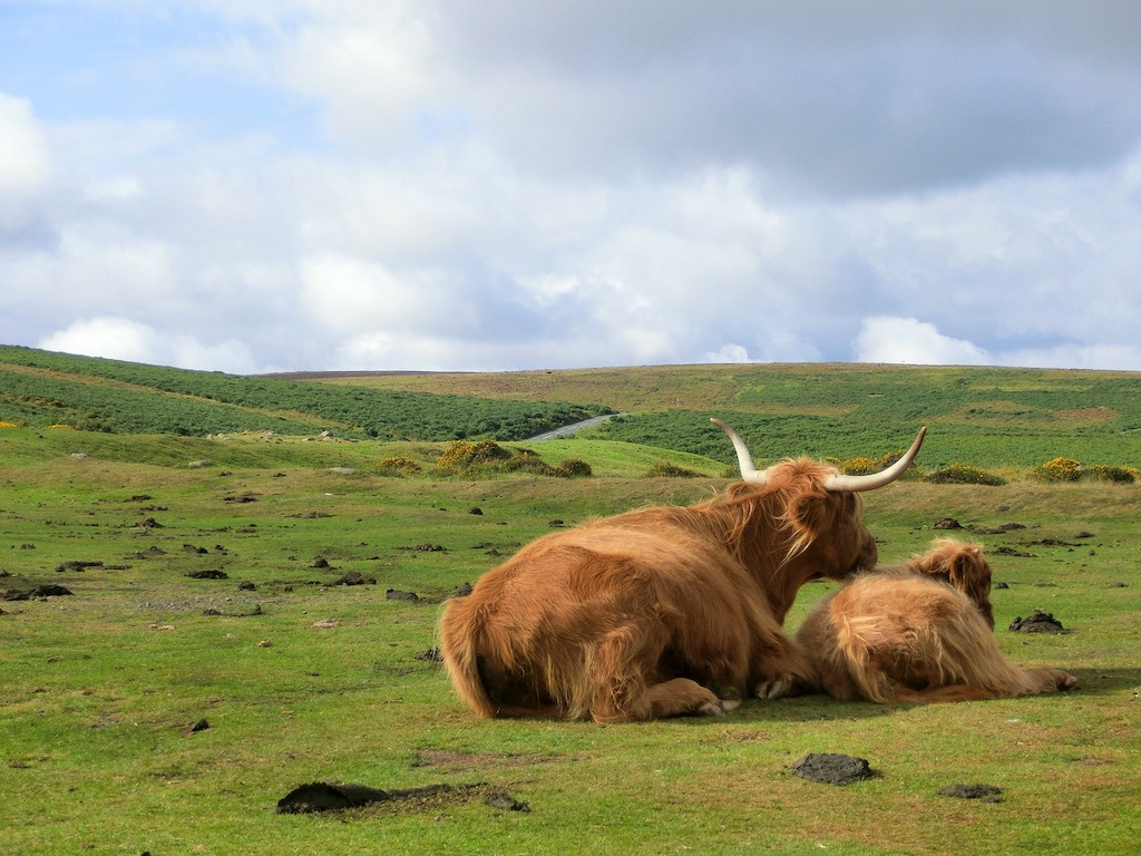 Dartmoor places to visit in the UK in spring