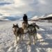 Husky Dog Sledding in Northern Iceland