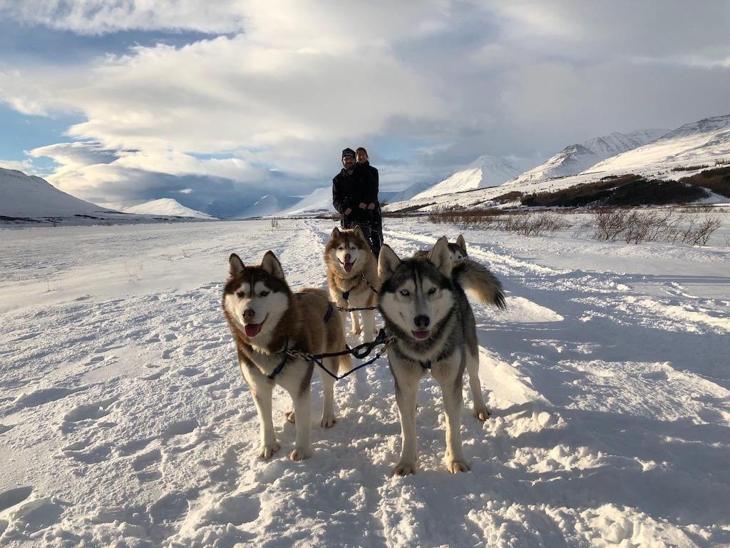 Husky Dog Sledding in Northern Iceland