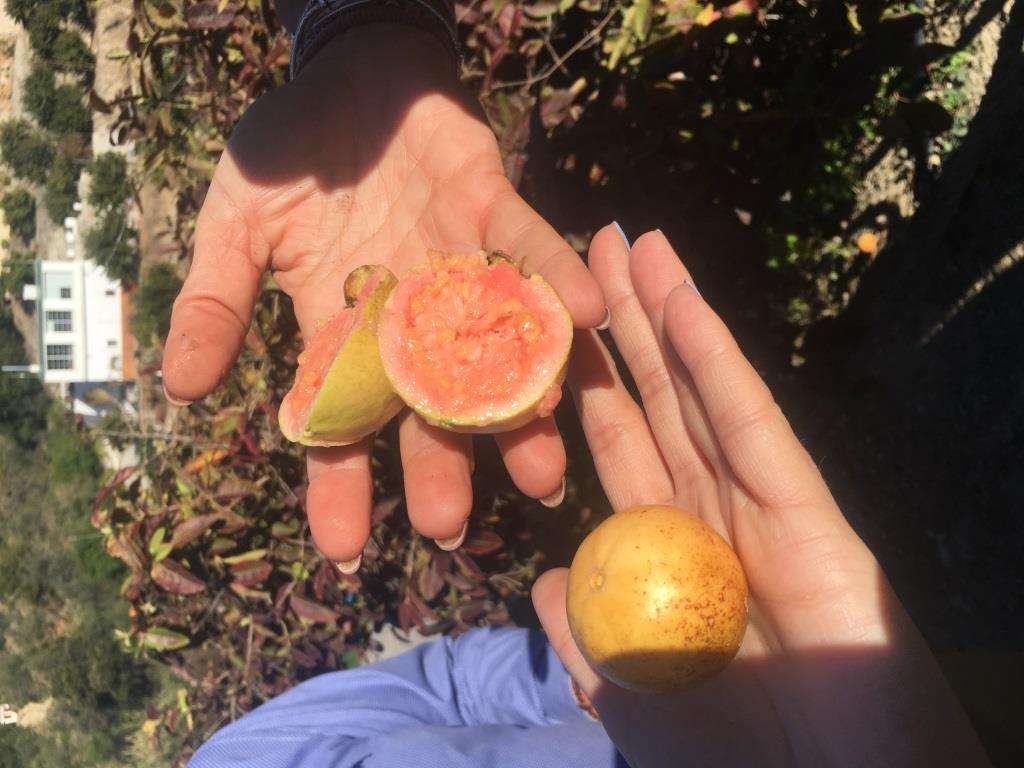 Costa Tropical: finca san ramon