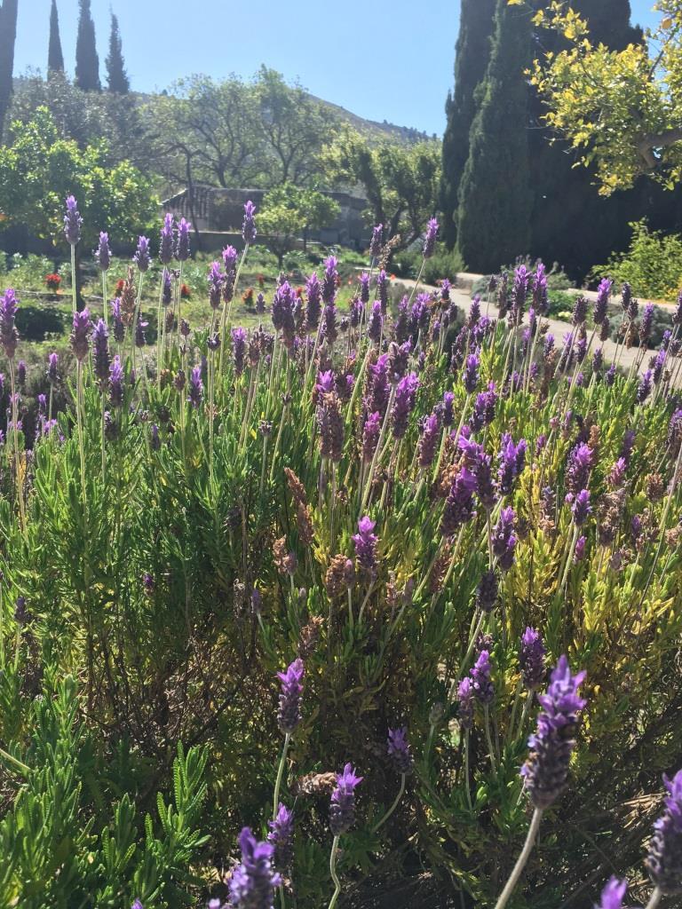 Jardin Nazarí