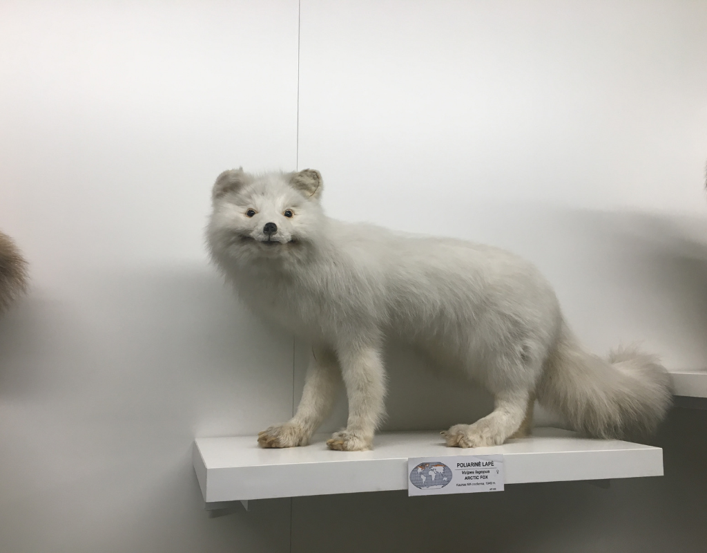 Kaunas Zoological Museum - taxidermy